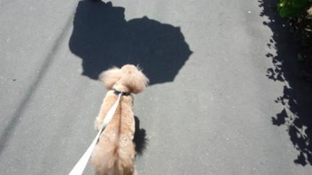 お散歩 (4)