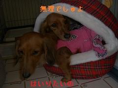 CIMG0287_20141206195856a94.jpg