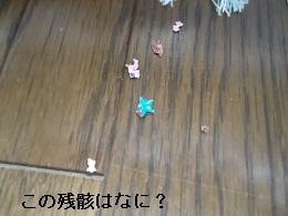 DSC05407.jpg