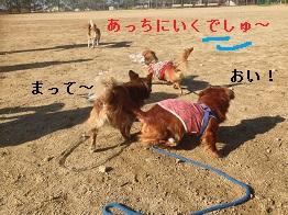 IMG_1165_2014111115354052f.jpg