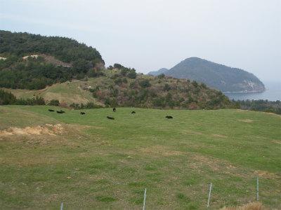 放牧風景3
