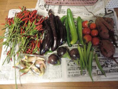 9・1収穫