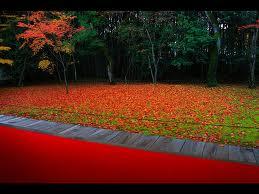 高桐院の紅葉3