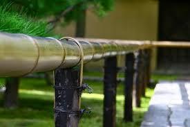 高桐院の新緑6