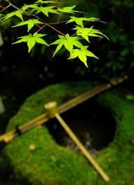 高桐院の新緑12