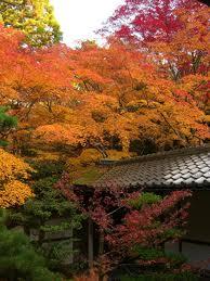 高桐院の紅葉8