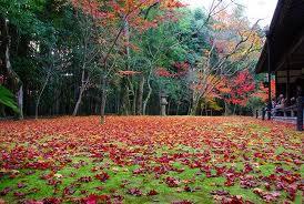 高桐院の紅葉11