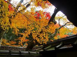 高桐院の紅葉13