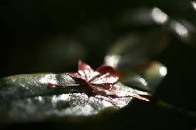 高桐院の初冬