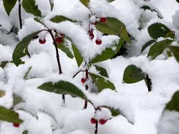 高桐院の雪14
