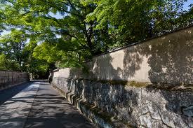 高桐院の新緑5
