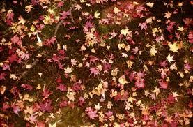 高桐院の紅葉9