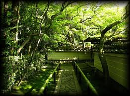 高桐院の新緑4