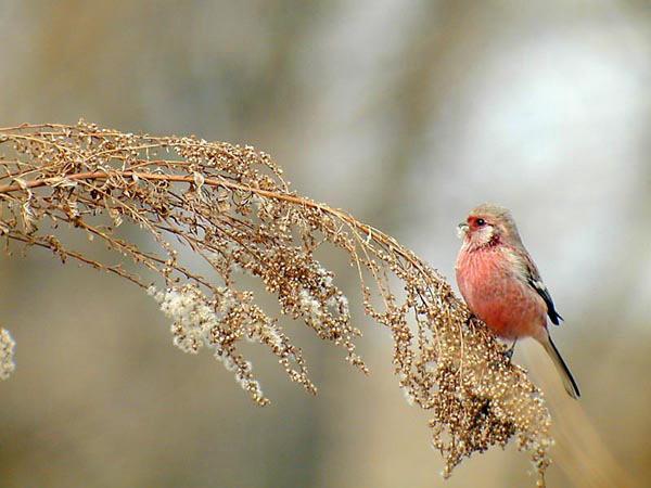 あかい鳥 1