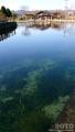丸池公園(1)