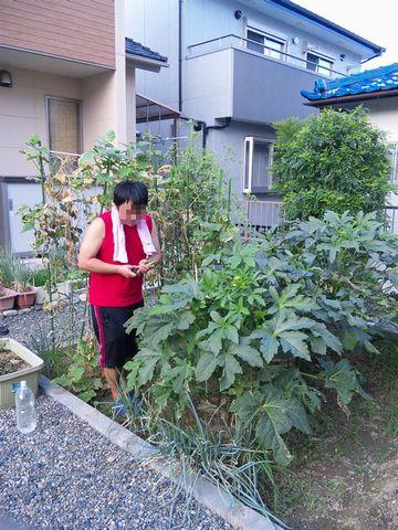施主様の家庭菜園