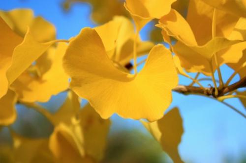 黄色お見事!
