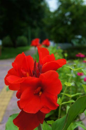 緑と花のセンターコース