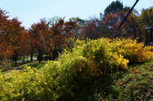 緑ヶ丘伐採