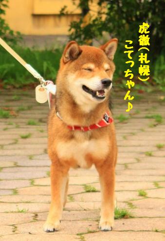 虎徹(こてっちゃん)