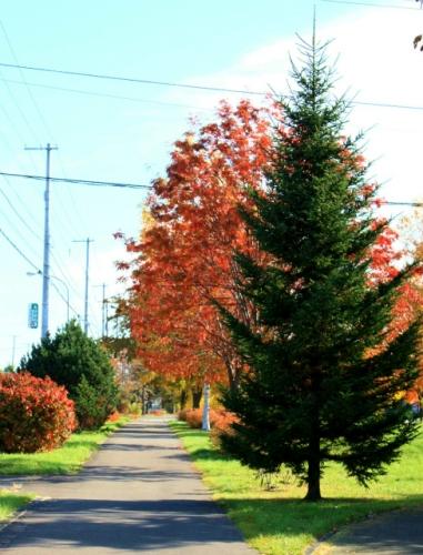 お散歩道の街路樹
