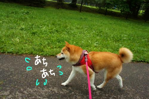 お散歩頑張る!