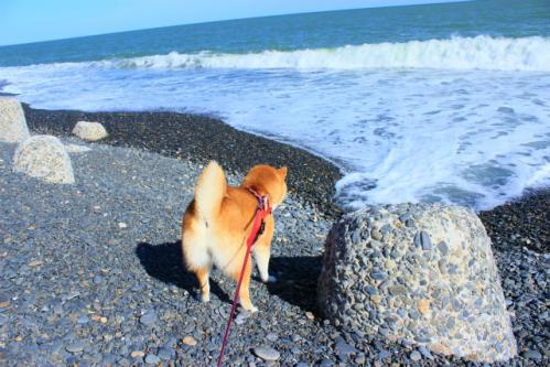 旭浜はなび