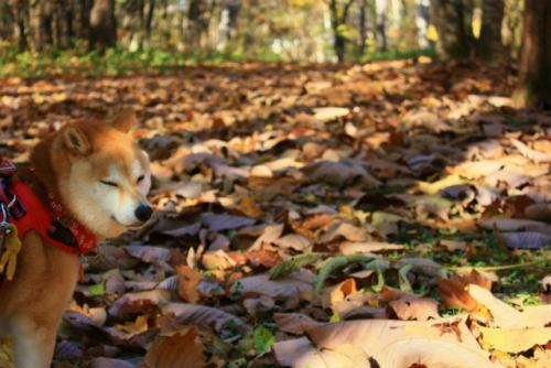 柏の葉っぱだらけ~