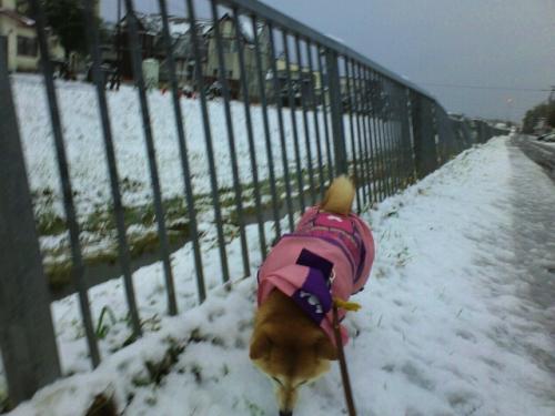 2013/10/16初雪!積雪!!