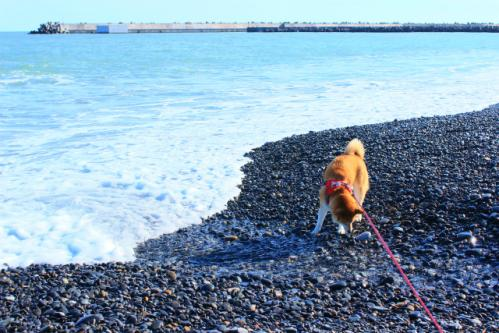 渚のはなび
