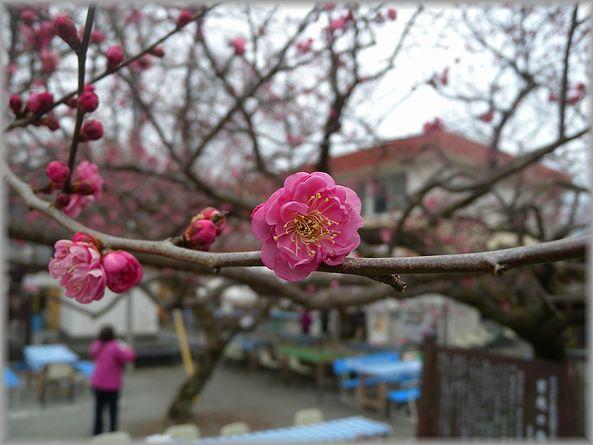 2012.2.23 曽我梅園2