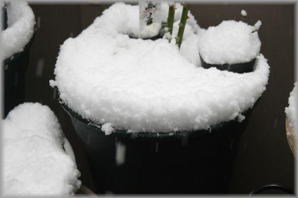 2012.2.29 snow