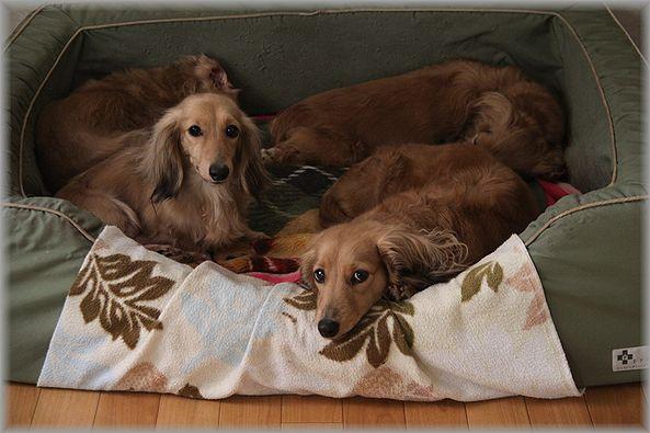 2012.5.13 ジェニー&フランソワ