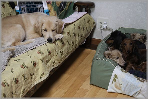 2012.12.06 パン君2
