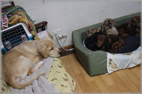 2012.12.06 パン君