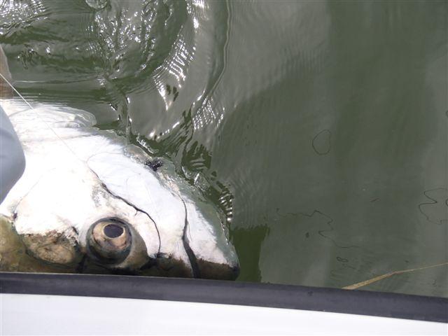 2012 6月17日~24日フロリダ 097