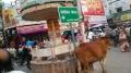 ②ごった返した町の牛