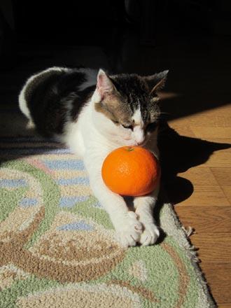 みかん猫②