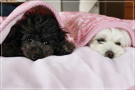 毛布、ぬくぬく~♪ 可愛いね^^