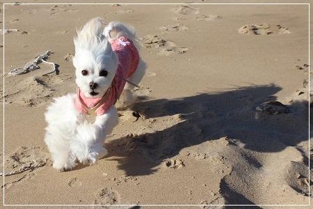海辺を走る、すももーん