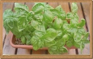 201005211513087c3-crop.jpg