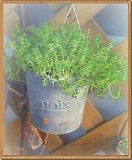 20100615112659606-crop.jpg