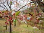高森峠の桜