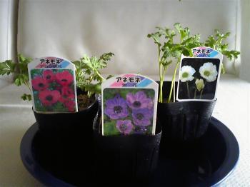 Garden20120114.jpg