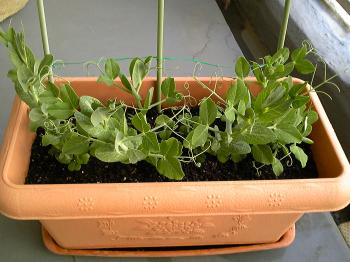 Garden20120227-1.jpg