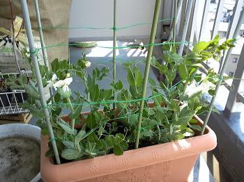 Garden20120328_20120613232015.jpg