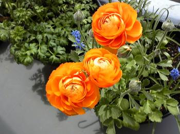 Garden20120421.jpg