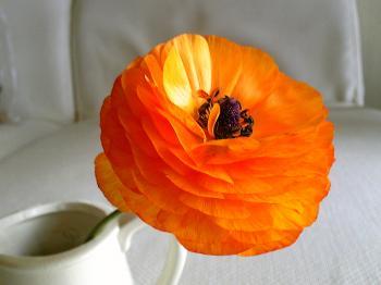 Garden20120429-3.jpg