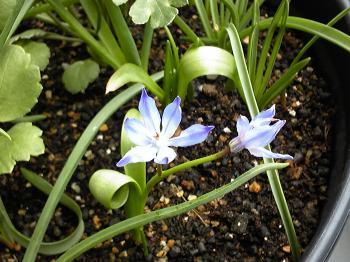 Garden20120429-4.jpg