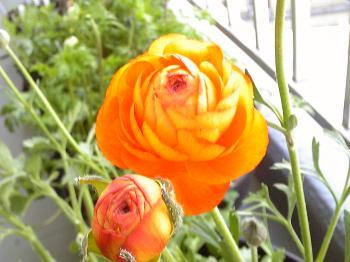 Garden20120429-5.jpg